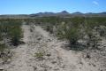 Bulldozer tracks at pueblo site 1