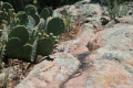 Still life with prickly pear and lichen covered boulders