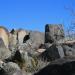 3 Rivers Petroglyph Site NM - photo by M.Smith